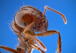 5 סיבות להיפטר מהנמלים בבית ומהר