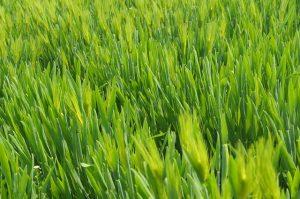 די לחול בגני הילדים, מדוע חשוב לעבור לדשא סינטטי בגנים?